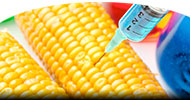 GFSR Food Safety Blog